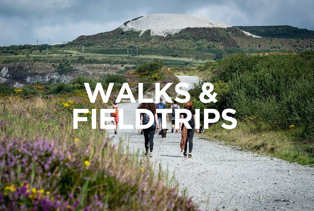 Walks and Fieldtrips at the Whitegold Festival